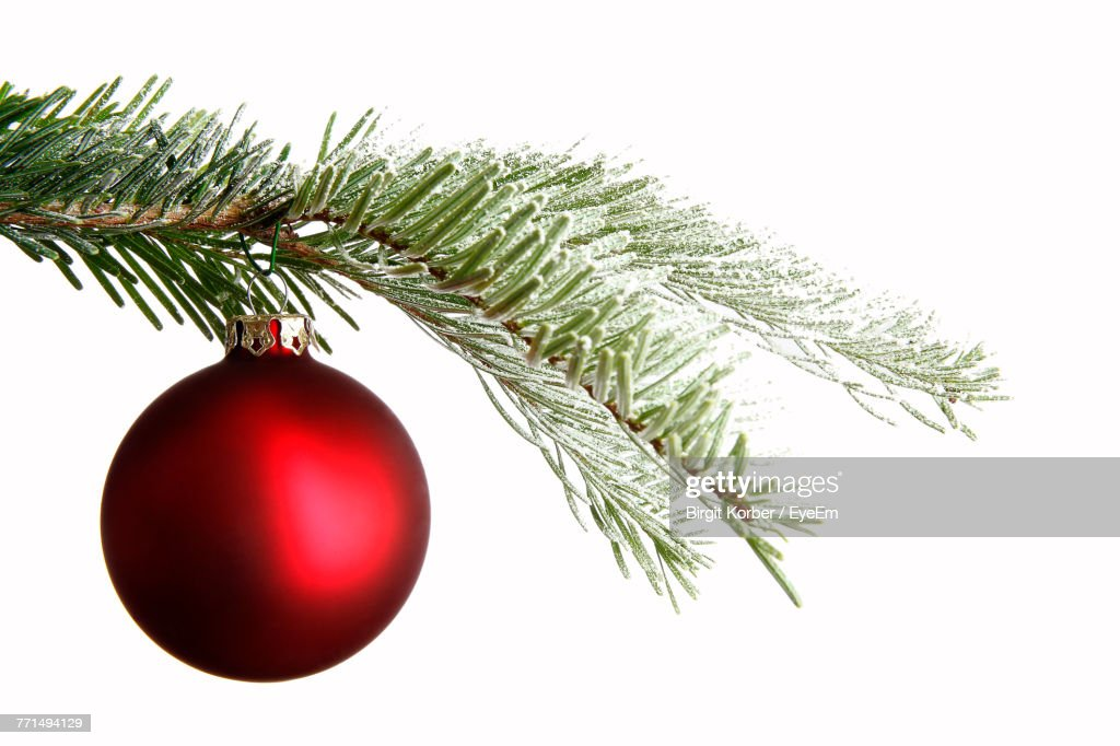 Close-Up Of Christmas Bauble And Twig Against White Background : Stock Photo