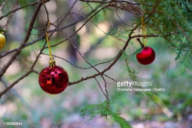 close-up of christmas decoration hanging on tree - cartoon santa claus stock photos and pictures