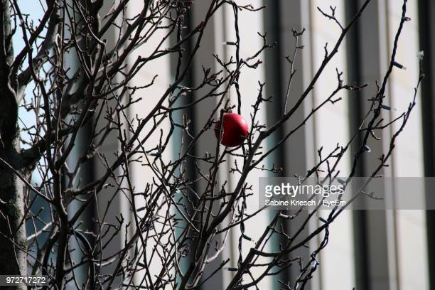 close-up of christmas ornament hanging on bare tree - sabine kriesch stock-fotos und bilder