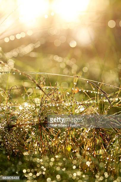 Close-Up Of Christmas Tree Against Bright Sun