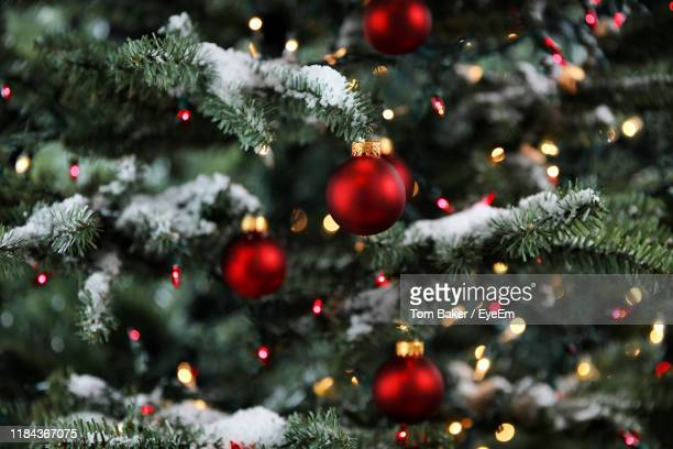 close-up of christmas tree - christmas tree stock pictures, royalty-free photos & images