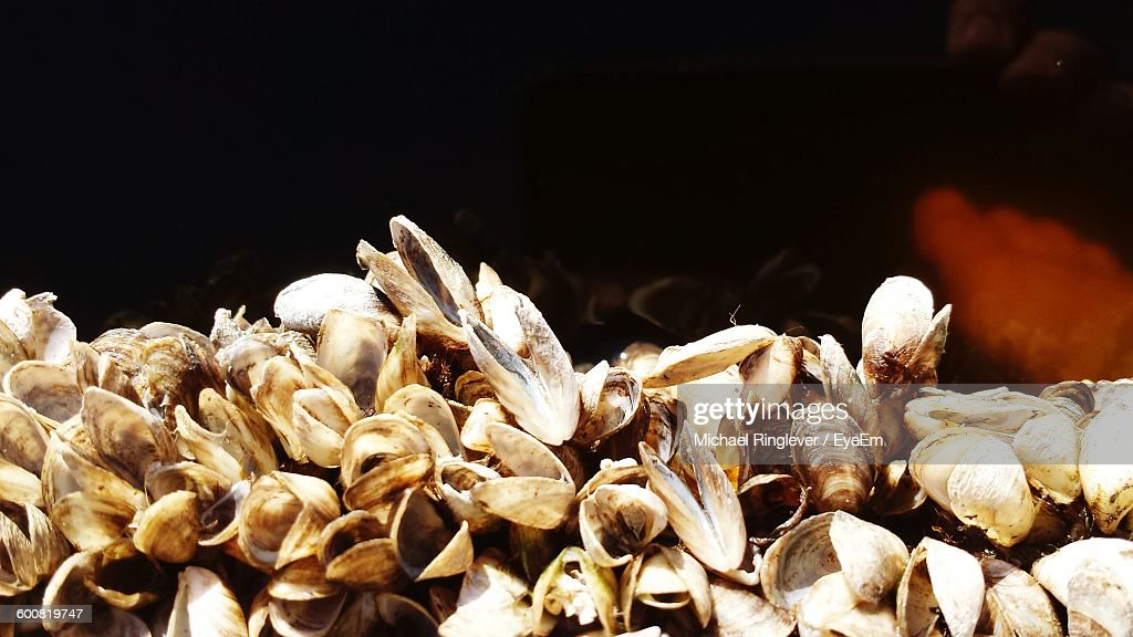 Close-Up Of Clams : Stock Photo