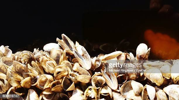 close-up of clams - siesta key stock pictures, royalty-free photos & images