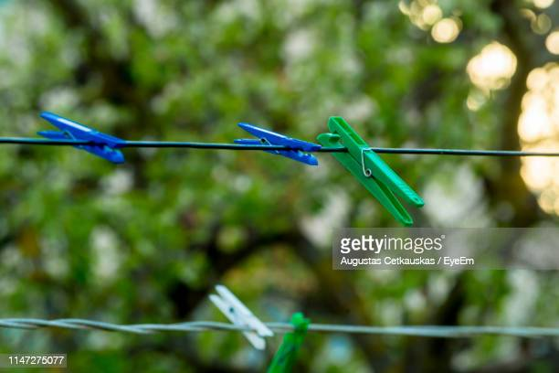 close-up of clothespins on clothesline against trees - cetkauskas stock pictures, royalty-free photos & images