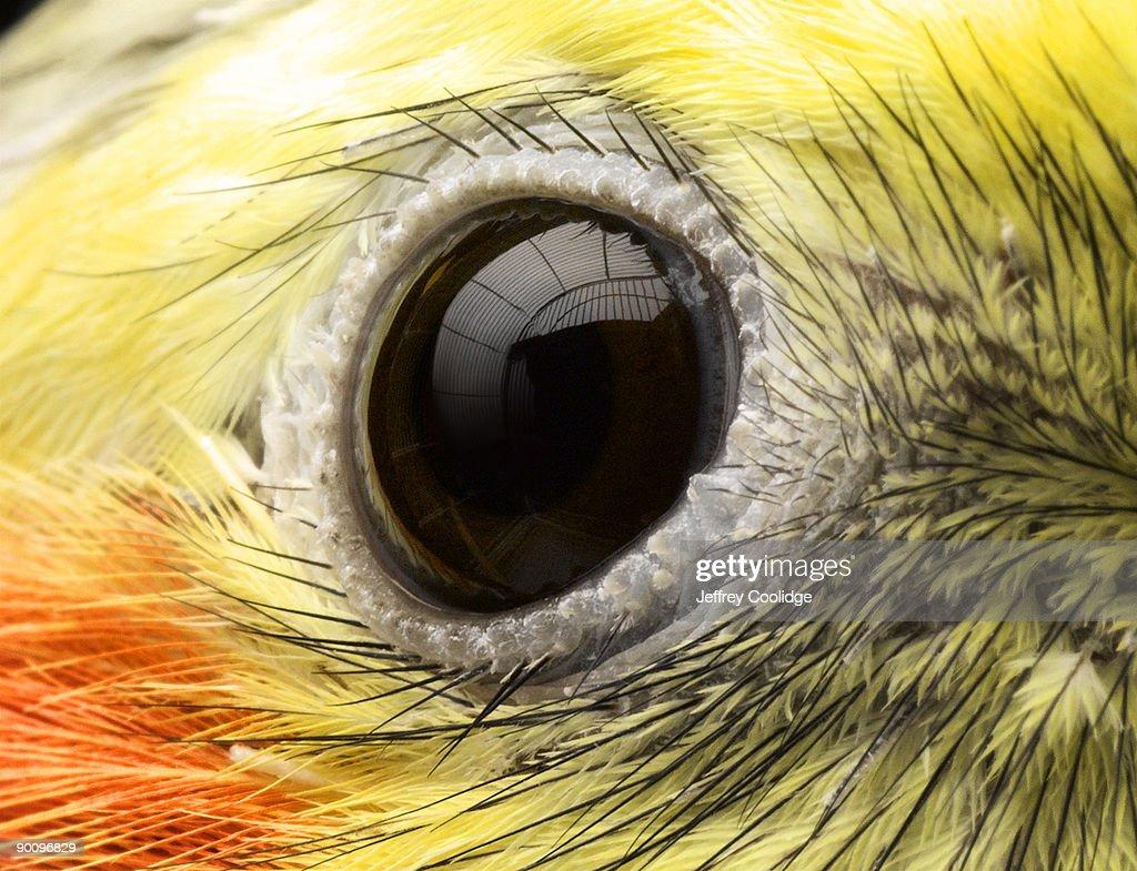 Close-up of Cockatiel's Eye