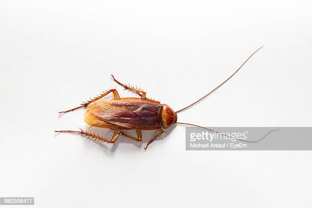 close-up of cockroach against white background - cockroach stock photos and pictures