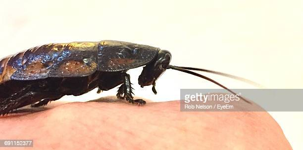 close-up of cockroach on human body part against wall - cockroach stock photos and pictures