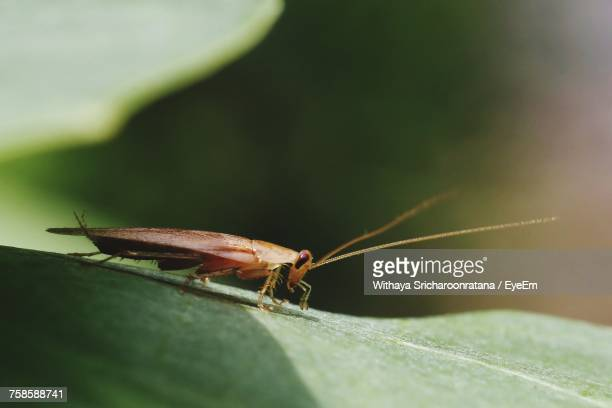 close-up of cockroach on leaf - cockroach stock photos and pictures