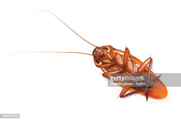 close-up of cockroach on white background - cockroach stock photos and pictures