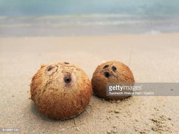 Close-Up Of Coconuts On Beach