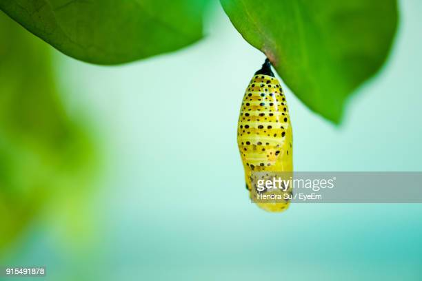 close-up of cocoon - cocoon stock pictures, royalty-free photos & images