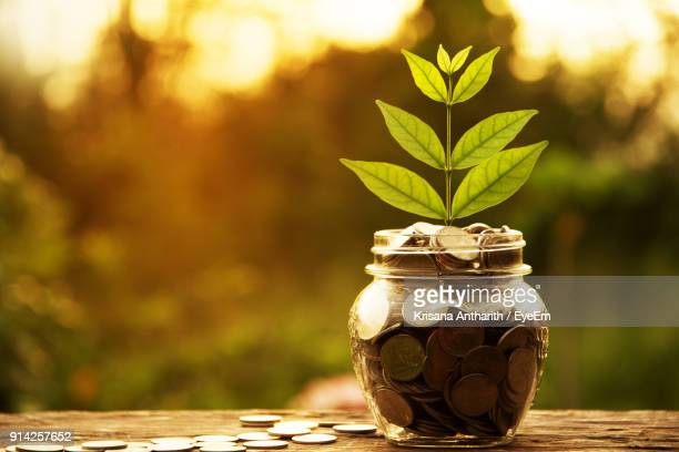 close-up of coins in jar with plant on table - savings stock pictures, royalty-free photos & images