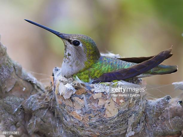 Close-Up Of Colibri On Blurred Background