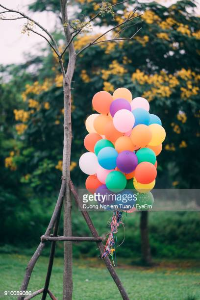 Close-Up Of Colorful Balloons Hanging On Tree At Park
