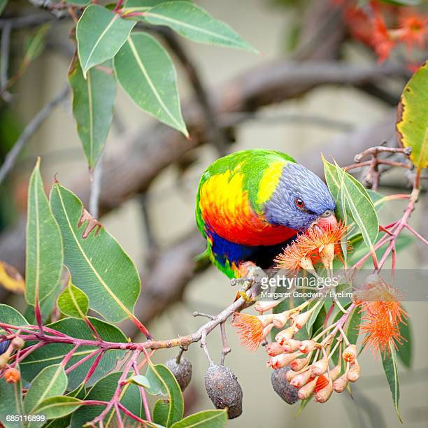 Close-Up Of Colorful Bird Perching On Branch In Garden