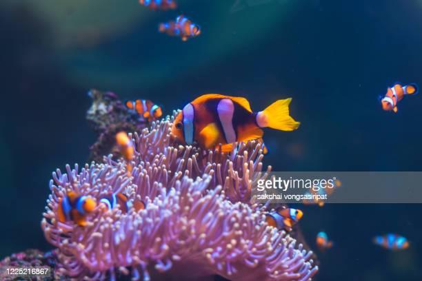 close-up of colorful tropical fish in tank aquarium - 熱帯魚 ストックフォトと画像