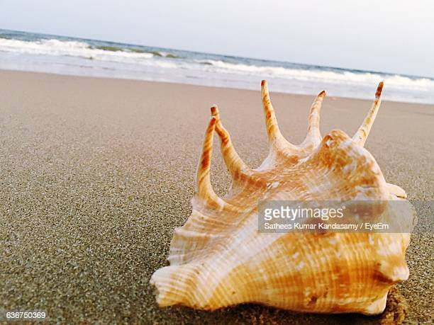 close-up of conch shell on shore at beach against sky - conch shell stock pictures, royalty-free photos & images