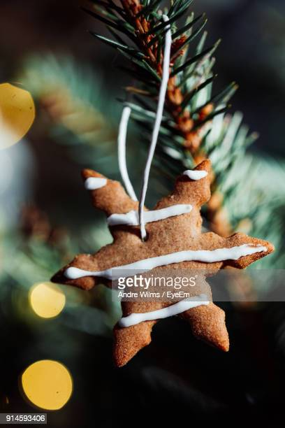 close-up of cookie hanging on christmas tree - andre wilms eyeem stock-fotos und bilder