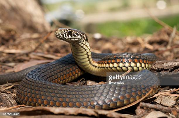 S Copperhead serpiente