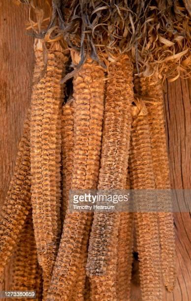 close-up of corn cobs hanging together as a door decoration - timothy hearsum bildbanksfoton och bilder