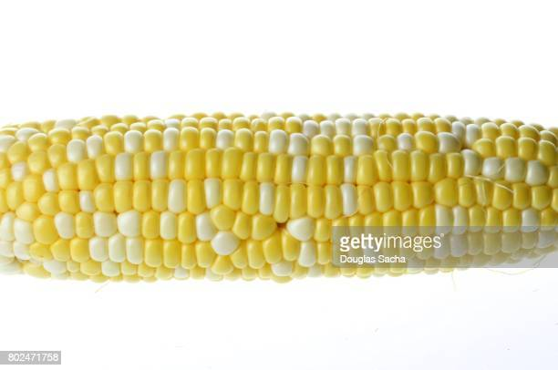 Close-up of Corn on a white background (zea mays)