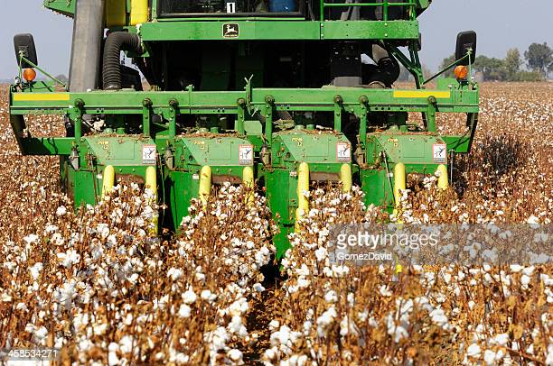 Close-up of Cotton Being Harvested