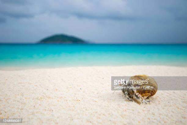 close-up of crab on beach against sky - thailand stock pictures, royalty-free photos & images