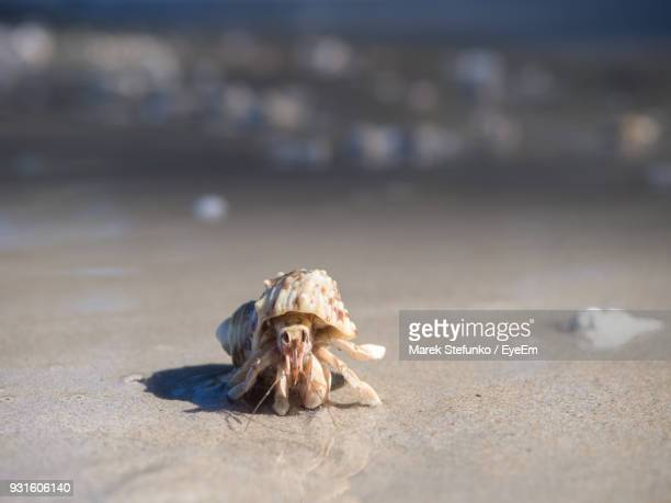 close-up of crab on sand at beach - marek stefunko stock photos and pictures