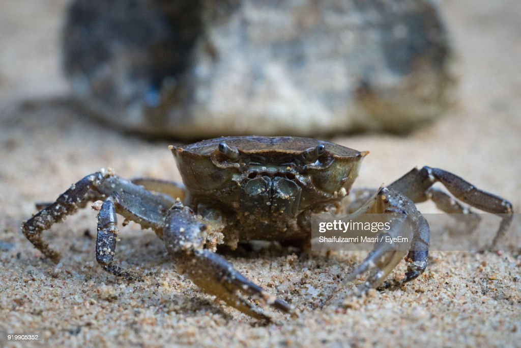 Close-Up Of Crab On Sand : Stock Photo