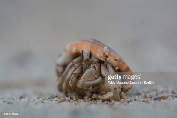 close-up of crab on sand - hermit crab stock pictures, royalty-free photos & images