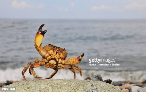 close-up of crab on stone against sea - crab stock pictures, royalty-free photos & images