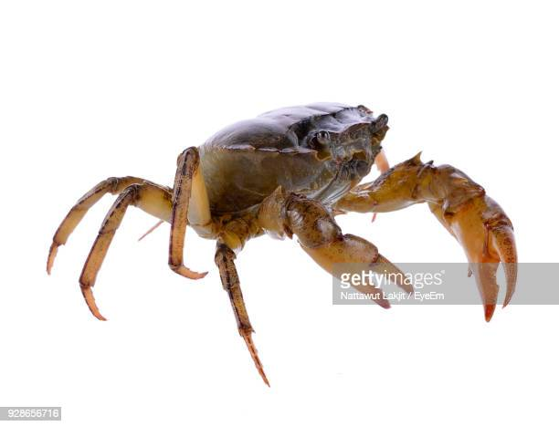 Close-Up Of Crab Over White Background