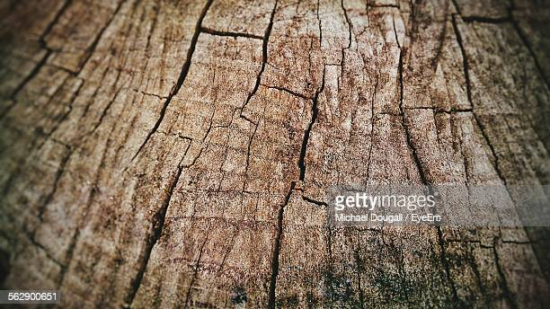 Close-Up Of Cracked Tree Stump At Forest
