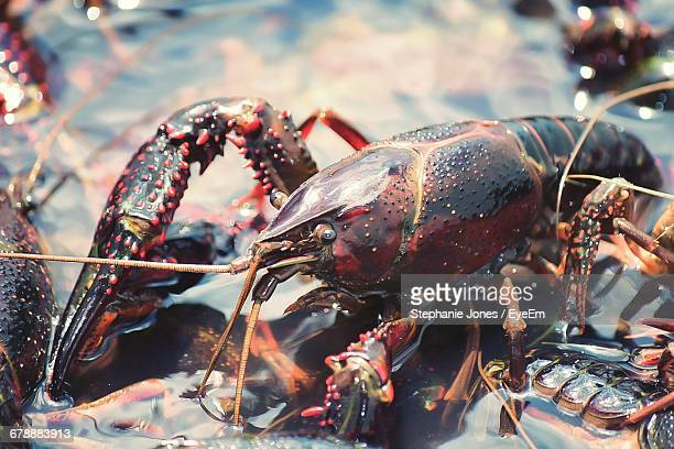 Close-Up Of Crayfish In Water At Market Stall