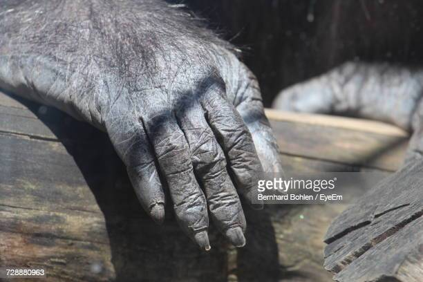 close-up of cropped gorilla hand - gorilla hand stock photos and pictures