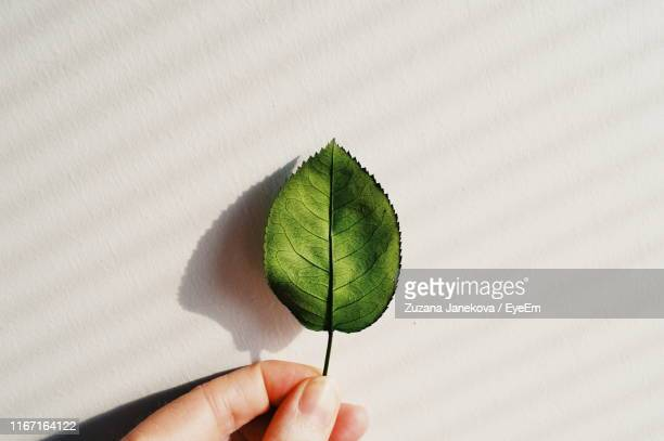 close-up of cropped hand holding leaf - zuzana janekova stock pictures, royalty-free photos & images