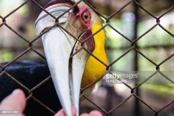 Close-Up Of Cropped Hand Touching Hornbill Beak