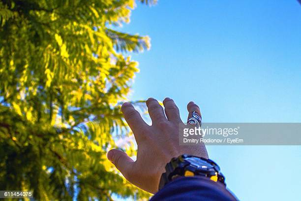 Close-Up Of Cropped Hand With Wristwatch By Tree Against Sky