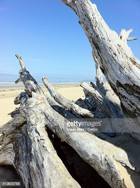 Close-up of cropped logs on shore against clear blue sky