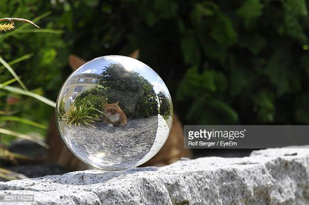 Close-up of crystal ball on stone in field