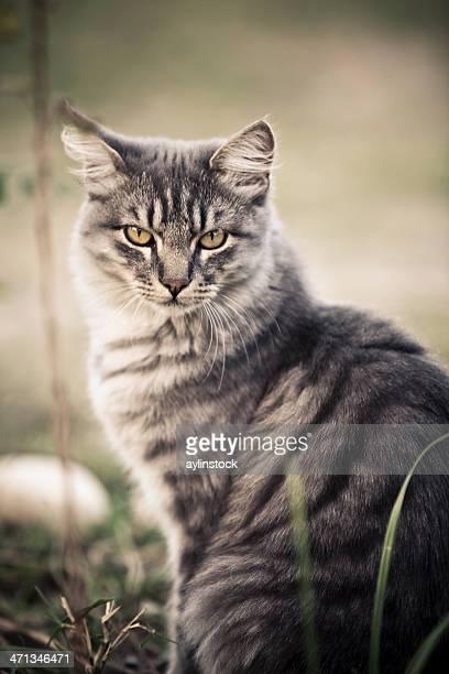 Close-up of cute cat