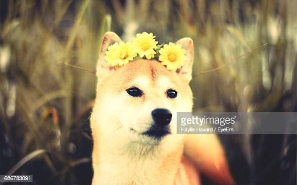 Close-Up Of Cute Dog Wearing Yellow Flowers