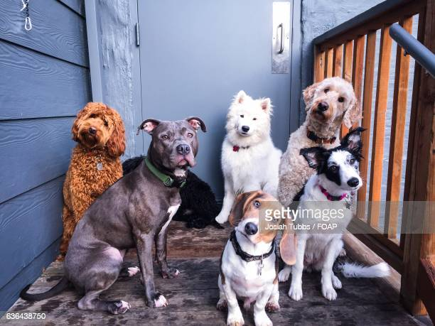 Close-up of cute dogs in front of door