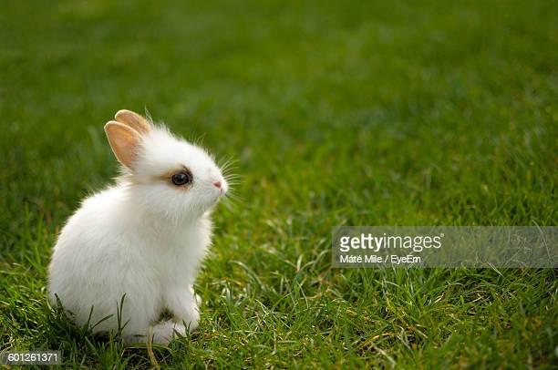 Close-Up Of Cute Young Rabbit On Grassy Field