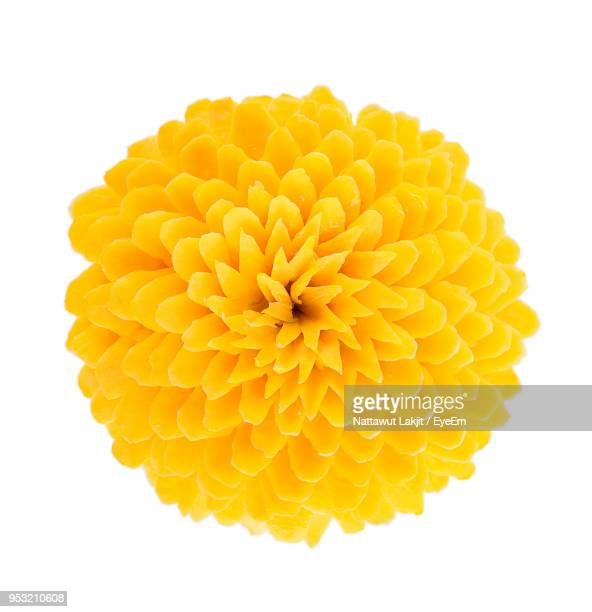 close-up of dahlia flower against white background - 花 ストックフォトと画像