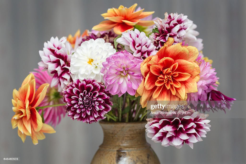 Close-Up Of Dahlia In Vase Against Wall : Stock Photo