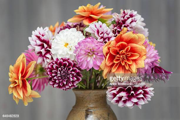 close-up of dahlia in vase against wall - bunch of flowers stock pictures, royalty-free photos & images