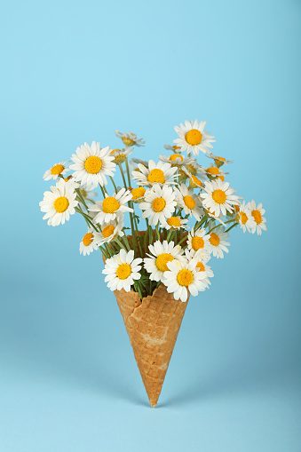 Close-Up Of Daisies In Ice Cream Cone Against Blue Background - gettyimageskorea
