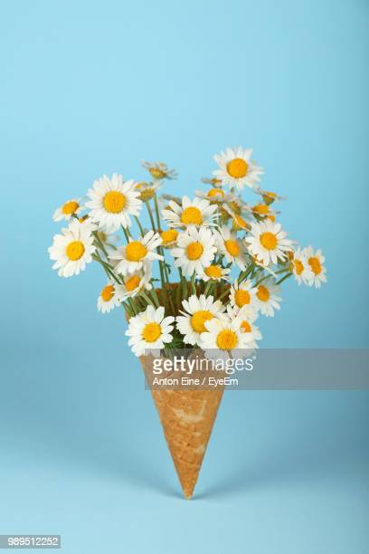 close-up of daisies in ice cream cone against blue background - still life stock pictures, royalty-free photos & images