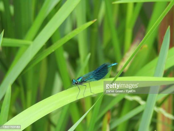 close-up of damsel fly on leaf - canal stock pictures, royalty-free photos & images